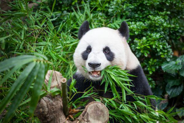 Alles Bambus: Das Trendparkett als nachthaltige Alternative